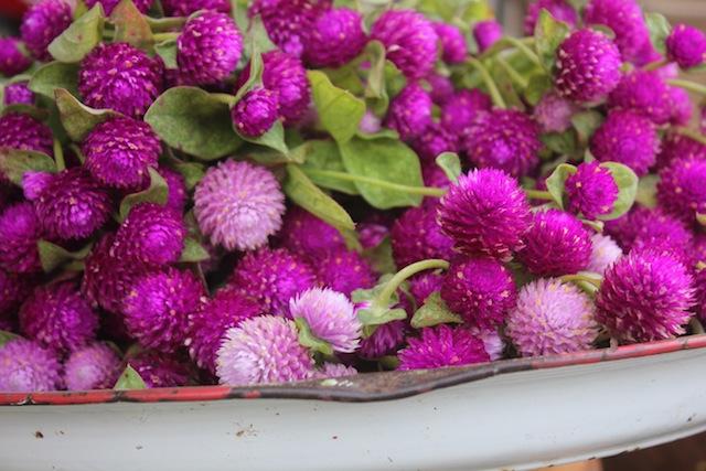 Flowers05